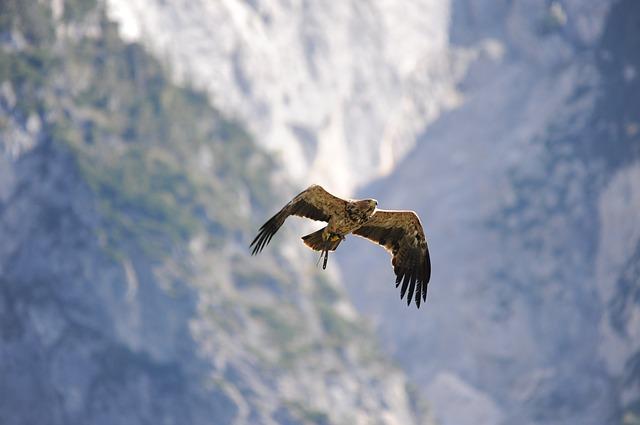 生命谷底盤旋而上的老鷹